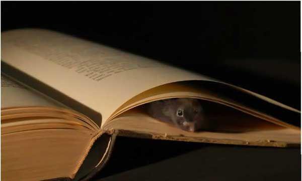 Il topo e i libri for Libri in italiano