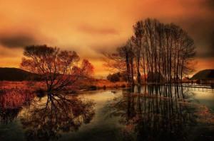 alberi e lago