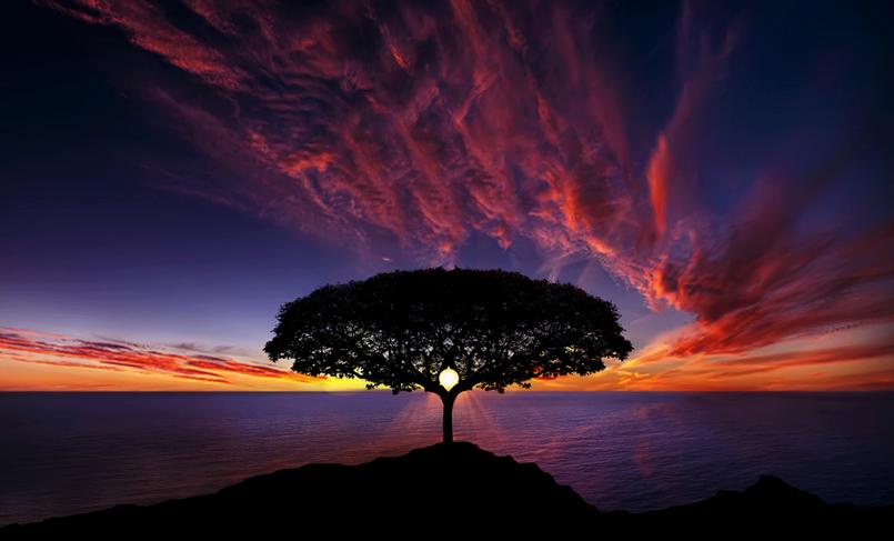 albeo al tramonto sul mare