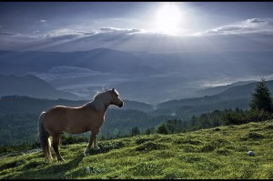 cavallo e luce
